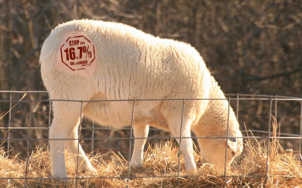 sheep-branded