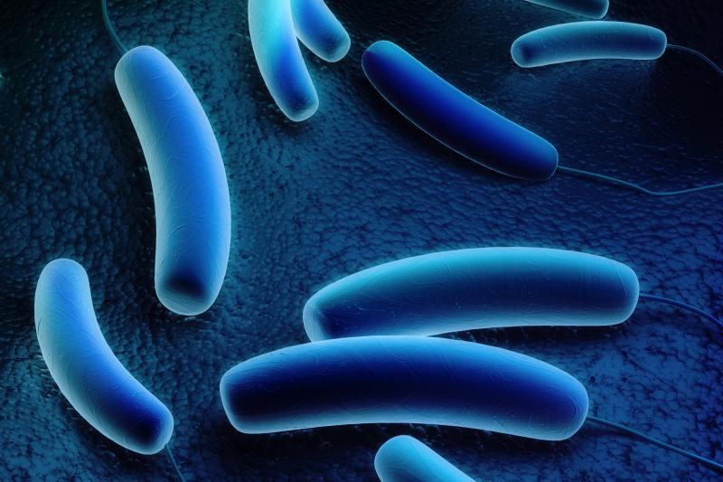 Legionella Pneumophila Image 1a