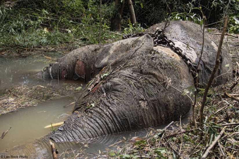 Dead Elephant Image 4a