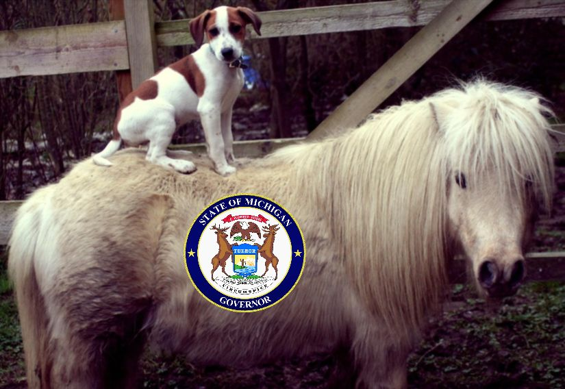 Dog and Poney Show Image 4